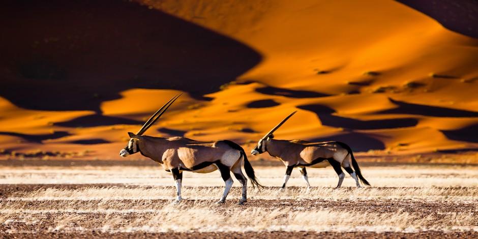 Oryx dans les dunes de Sossusvlei