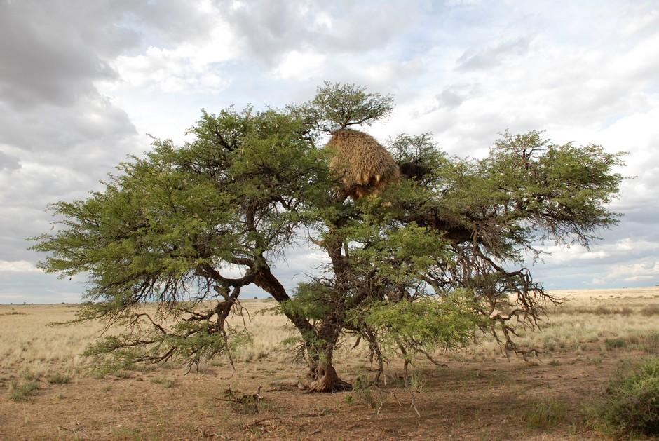 Nid dans un arbre
