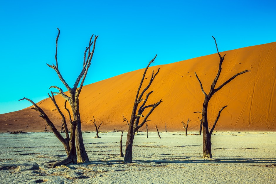 Arbres dans le Namib-Naukluft