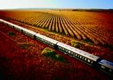 Dans les vignes d'Afrique du Sud